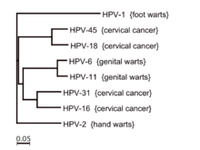 human papillomavirus vaccine success rate prostate cancer benign hypertrophy