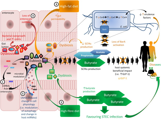 dysbiosis markers