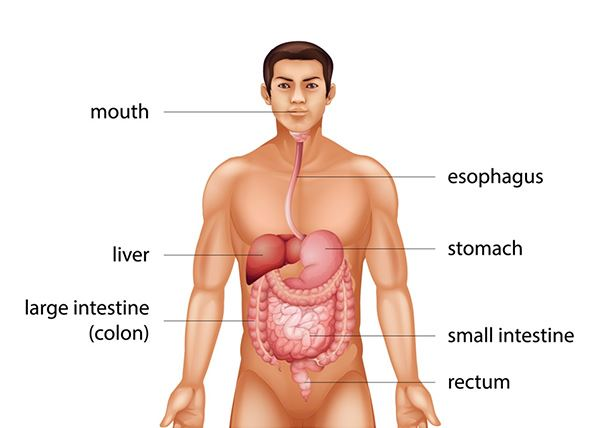 rectal cancer in colon hpv nhs direct