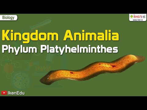 Platyhelminthes 5 exemple Filo platyhelminthes, trematod | primariacetateni.ro
