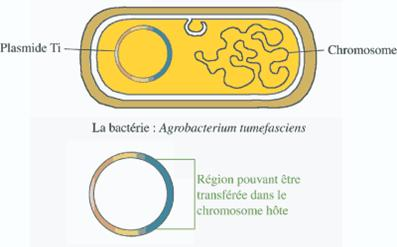 toxine bacterienne transgenique bacillus thuringiensis helmintox suspension buvable