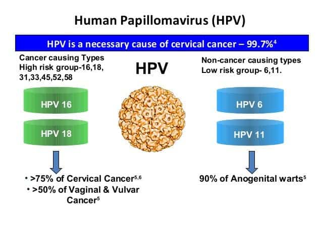 hpv high risk cancer cells foot wart herbal treatment