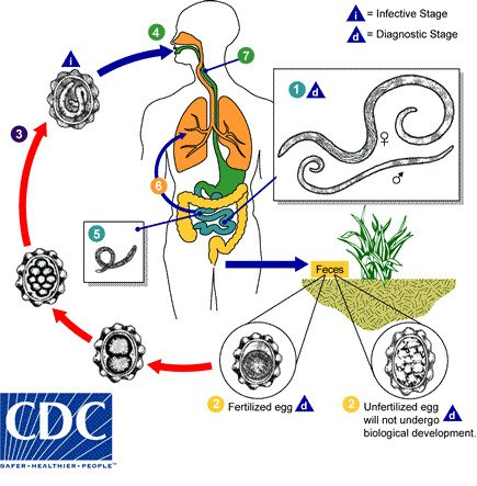 prevention of helminth diseases requires