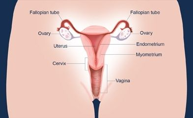 ovarian cancer quora cancer more aggressive after chemo